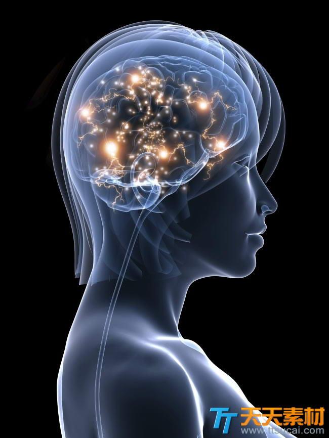 人体大脑侧面透视图片下载