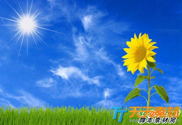 蓝天向日葵唯美高清图片素材下载