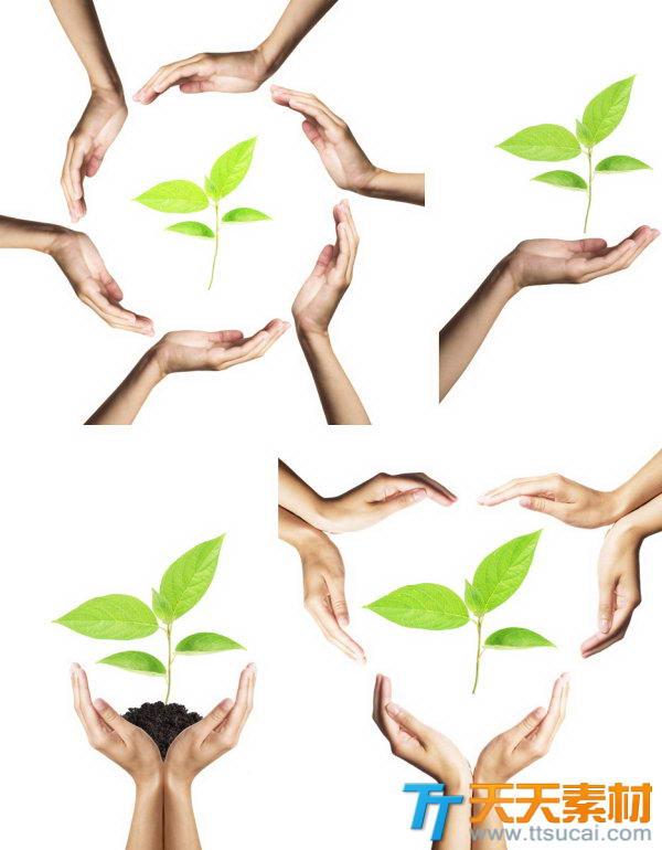 手和树叶环保题材高清图片素材