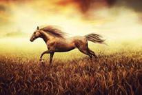 黄昏下奔跑的骏马唯美图片素材